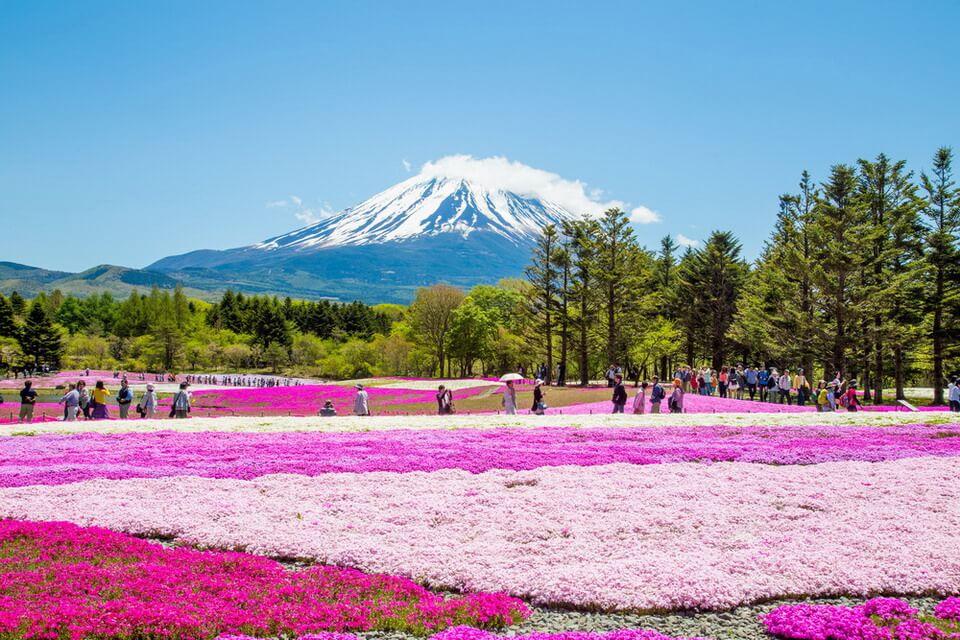 15 điều bạn có thể bạn chưa biết về du lịch Nhật Bản 1