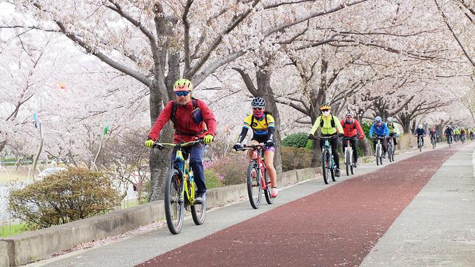 Khám phá con đường hoa anh đào dài nhất Hàn Quốc 7