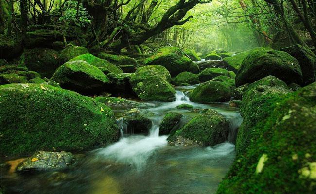 Du lịch Nhật Bản nên đi đâu 3